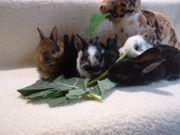 Kaninchenbabys vor ab Bilder 3