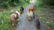 Hundebetreuung/ Hundesitter
