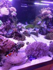 Osmosewasser osmose Wasser Meerwasser Aquarium