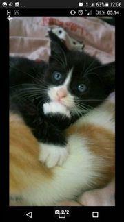 Mix Kätzchen suchen