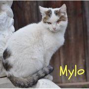 Mylo Kater aus dem Tierschutz