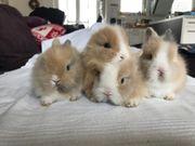 Süße Kaninchenbabie ab
