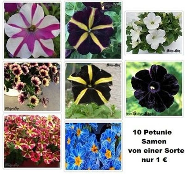 20 Petunie Samen Verschiedene Sorten Blume Garten Pflanze Anzucht In