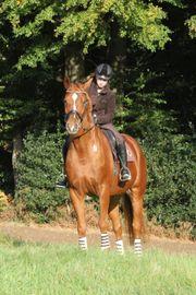 Beistellpferd - eingeschränkt reitbar