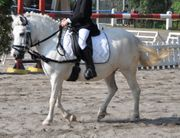 Pony Mix Shetty Stute mit