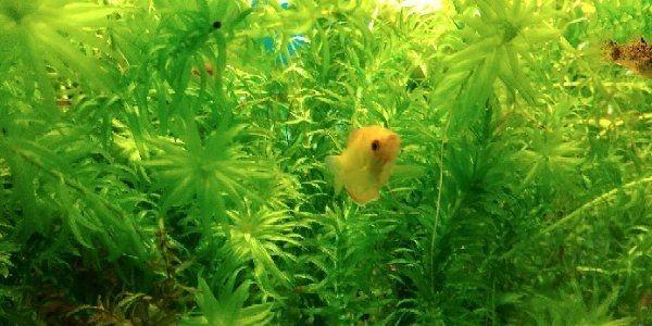 Fisch Aufnahme » Fische, Aquaristik