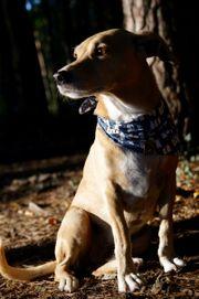 Private Tagesbetreuung für Hund gesucht