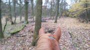 Pferdefreundschaft bis zum