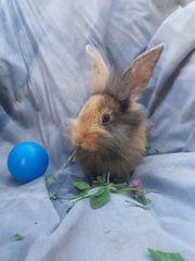 handzarme Kaninchen dürfen