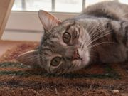 Katze Chloe (FIV)