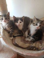 süße katzen kinder