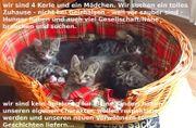 Katzenbabys für verantwortungsbewußte
