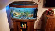 Panorama Aquarium von