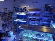 Meerwasser Korallen Ableger Muscheln Krebse