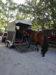 Pferdehänger mit frischem
