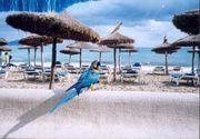 Mallorca, Can Picafort,