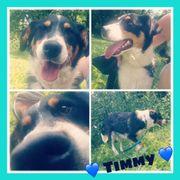 Timmy sucht sein