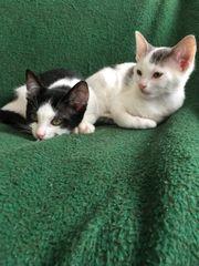 Katzenkinder 4 Monate
