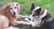 Zwei liebe Hunde