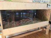Querterrarium, Holzterrarium, Terrarium